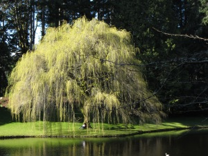 The dreamy...Bloedel Reserve on Bainbridge Island, Washington